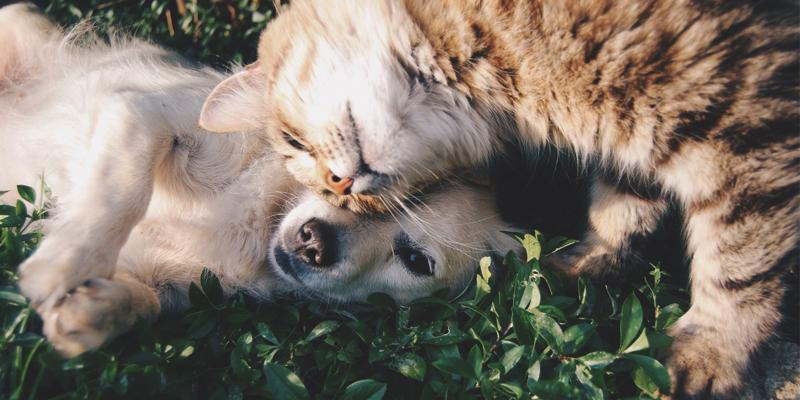A sustentabilidade e os animais de estimação