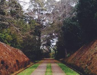 Como adaptar jardins para portadores de necessidades especiais