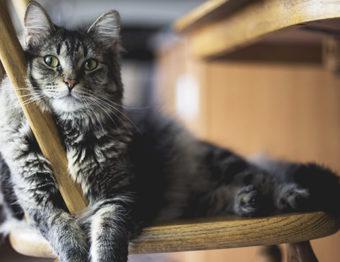 6 dicas para deixar seu pet (e sua casa!) cheirosos