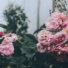6 formas de reanimar uma planta que está morrendo