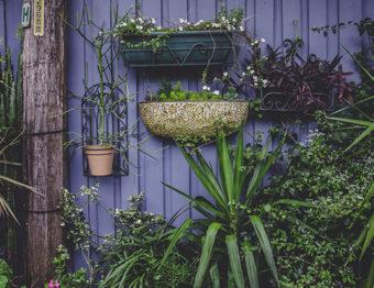 Jardim vertical: dicas de especialistas para a manutenção
