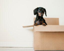 Décor: 6 dicas para preparar a casa para os pets