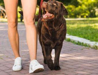 Pet place: animais de estimação ganham seu espaço