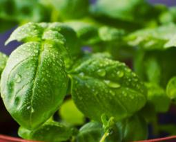 9 temperos para cultivar em casa