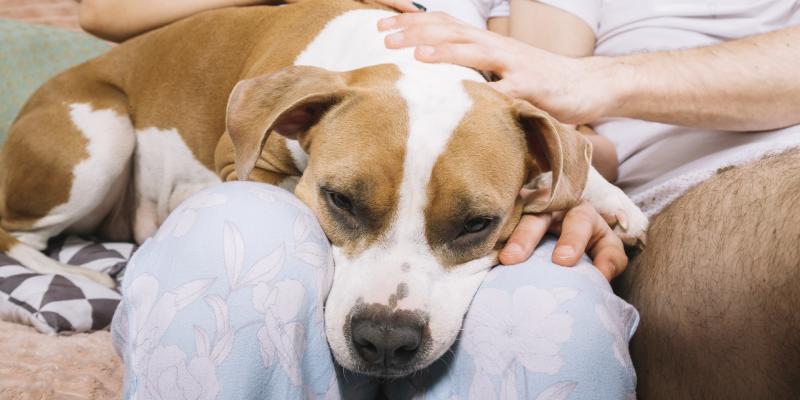 Condomínios não podem mais proibir pets em apartamentos