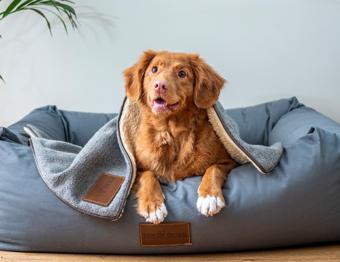 Pets em condomínios comerciais: é possível ter animais de estimação?